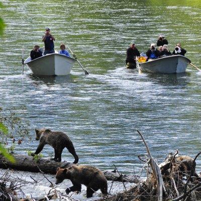 River Drift und Bären
