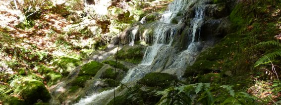 Schießbachtobel Wasserfall mit Brücke