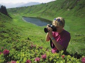 Fotografie Alpenrosen1