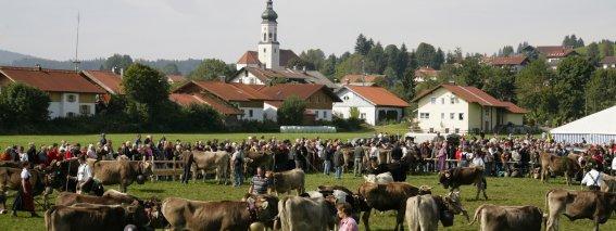 Viehscheid Wertach