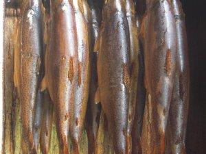 Wertacher Forelle