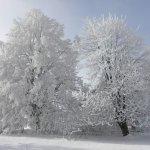 Winterimpressionen von Dr. Michael Schneider