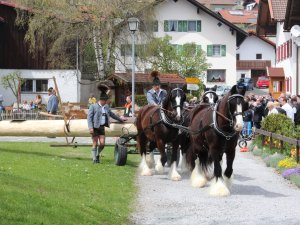 Maibaum mit Pferdekutsche