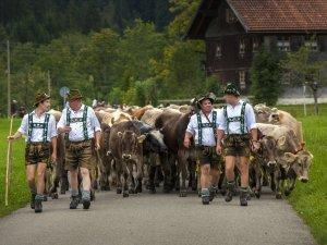 Viehscheid Wertach 2015