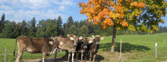 Herbst Schumpen