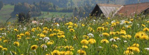 Blumenwiese Richtung Waldesruh mit Sorgschrofen