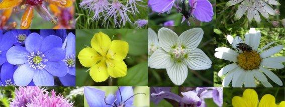Wildblumen Projekt Natur