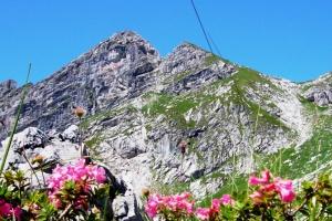 Alpenrosen motiv