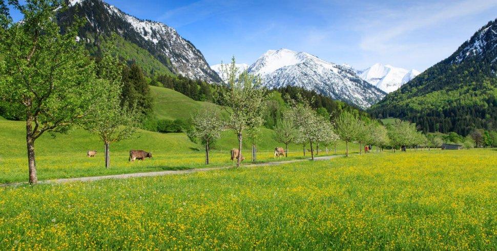 Frühlingspracht Oberstdorf