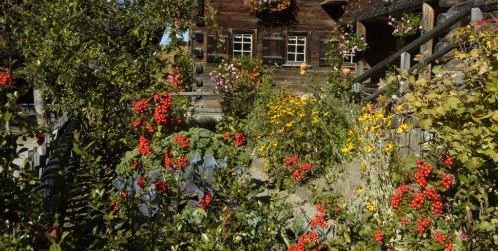 Blumenpracht in Gerstruben
