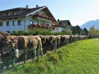 Viehscheidherde vor dem Haus