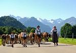 Viehscheid im September